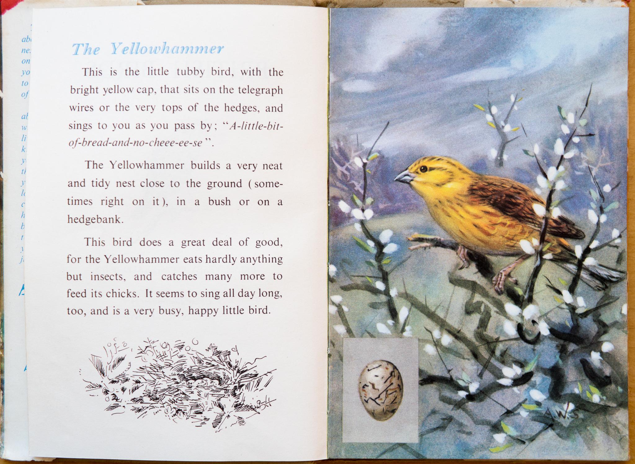 Ladybird Book of British Birds - Yellowhammer - The Hall of Einar