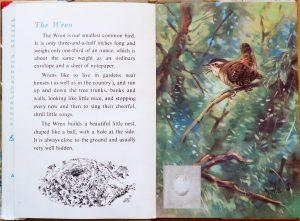 The Wren - Ladybird Book of British Birds - The Hall of Einar