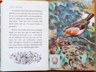The Robin - Ladybird Book of British Birds - The Hall of Einar