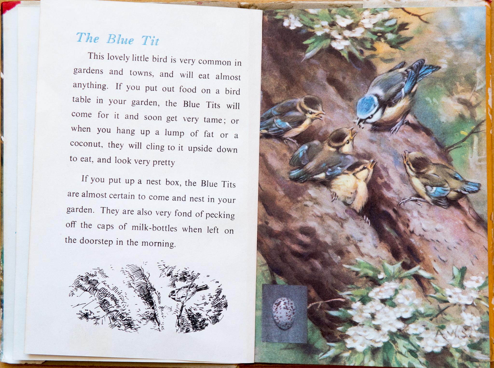 The Blue Tit - Ladybird Book of British Birds - The Hall of Einar