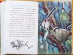 The Long-Tailed Tit - Ladybird Book of British Birds - The Hall of Einar