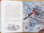 The Bullfinch - Ladybird Book of British Birds - The Hall of Einar