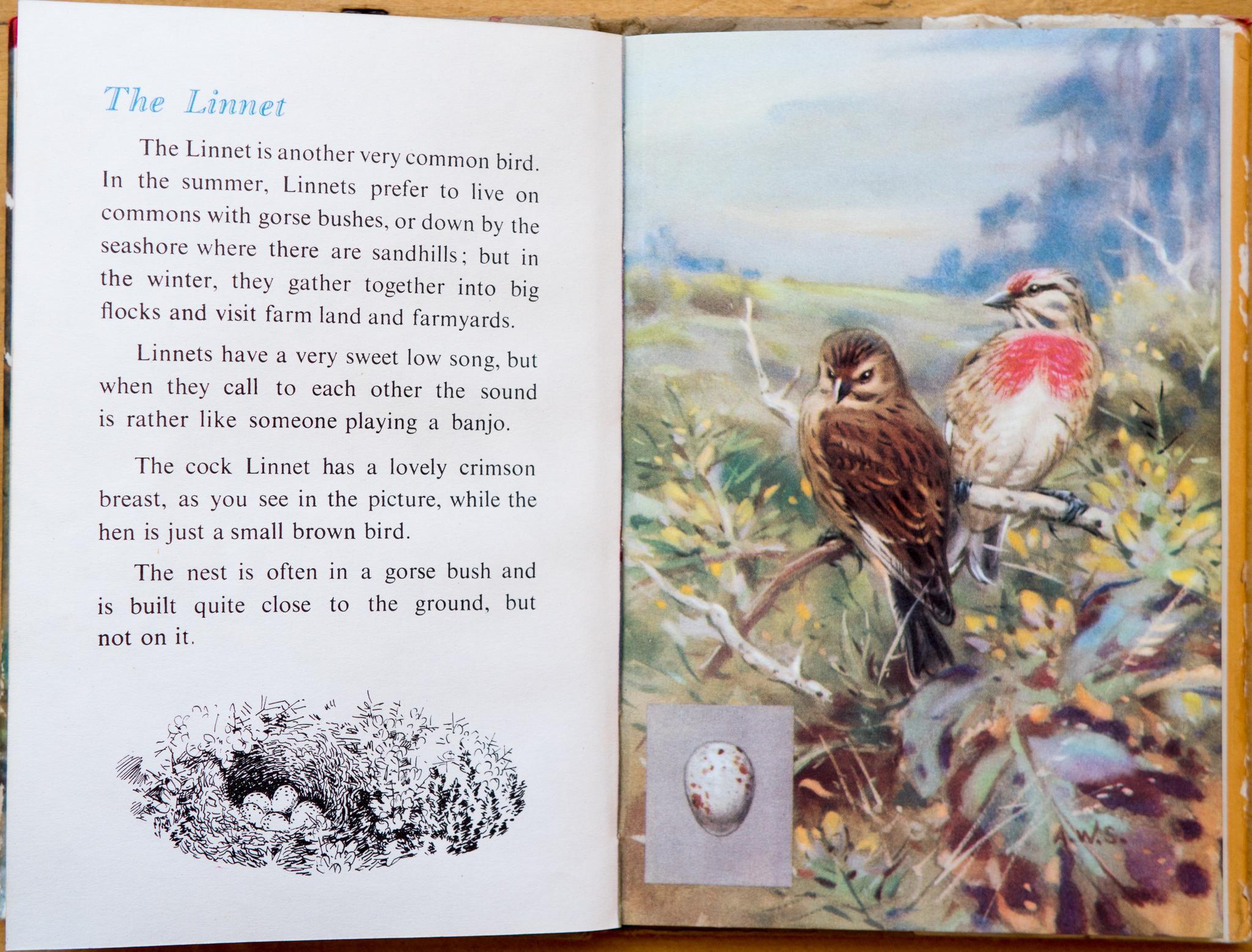 The Linnet - Ladybird Book of British Birds - The Hall of Einar