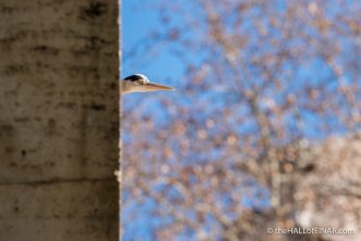 Heron on lungotevere - The Hall of Einar - photograph (c) David Bailey (not the)