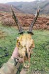Roe Deer - The Hall of Einar - photograph (c) David Bailey (not the)