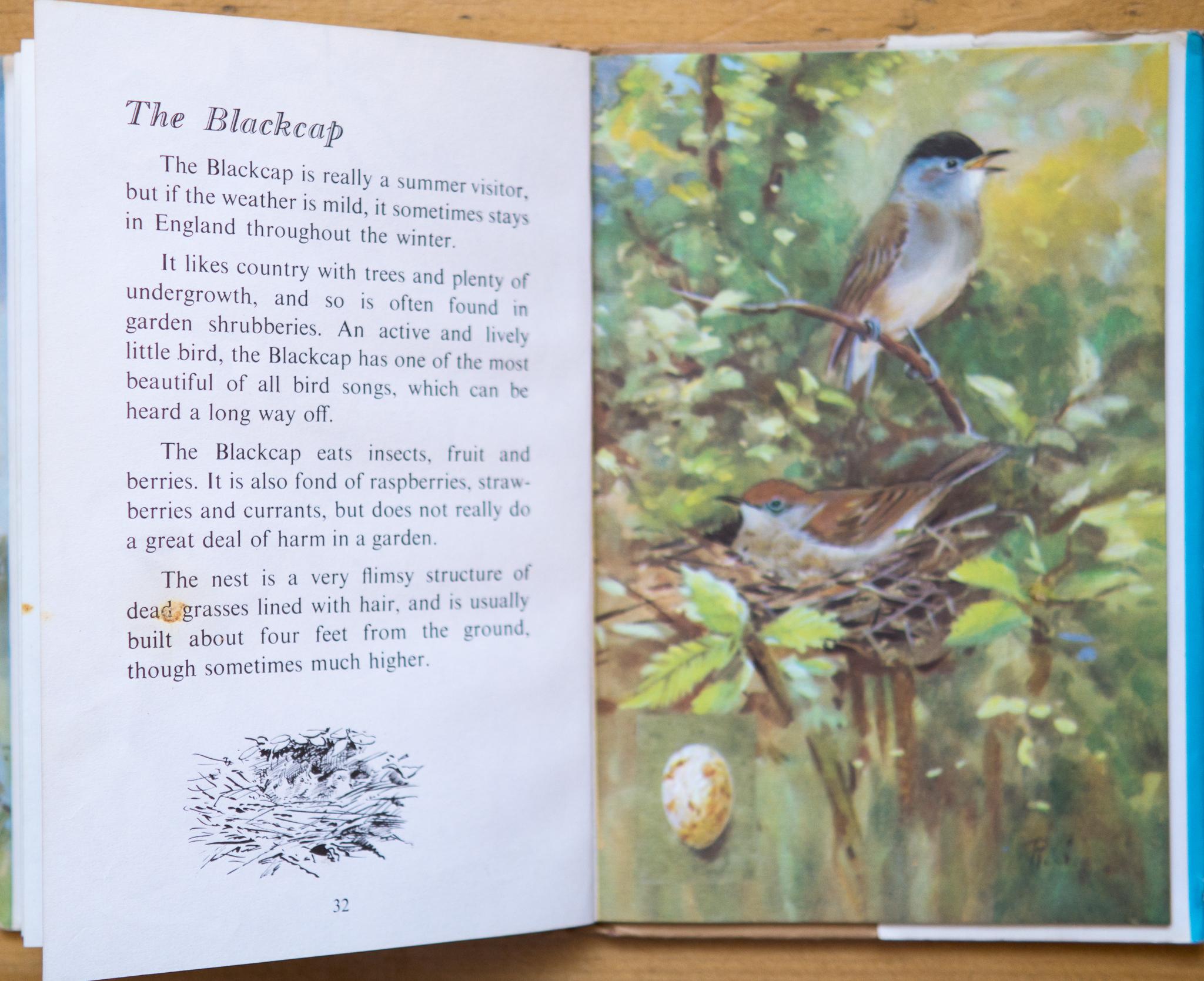 Blackcap - Ladybird Book of British Birds