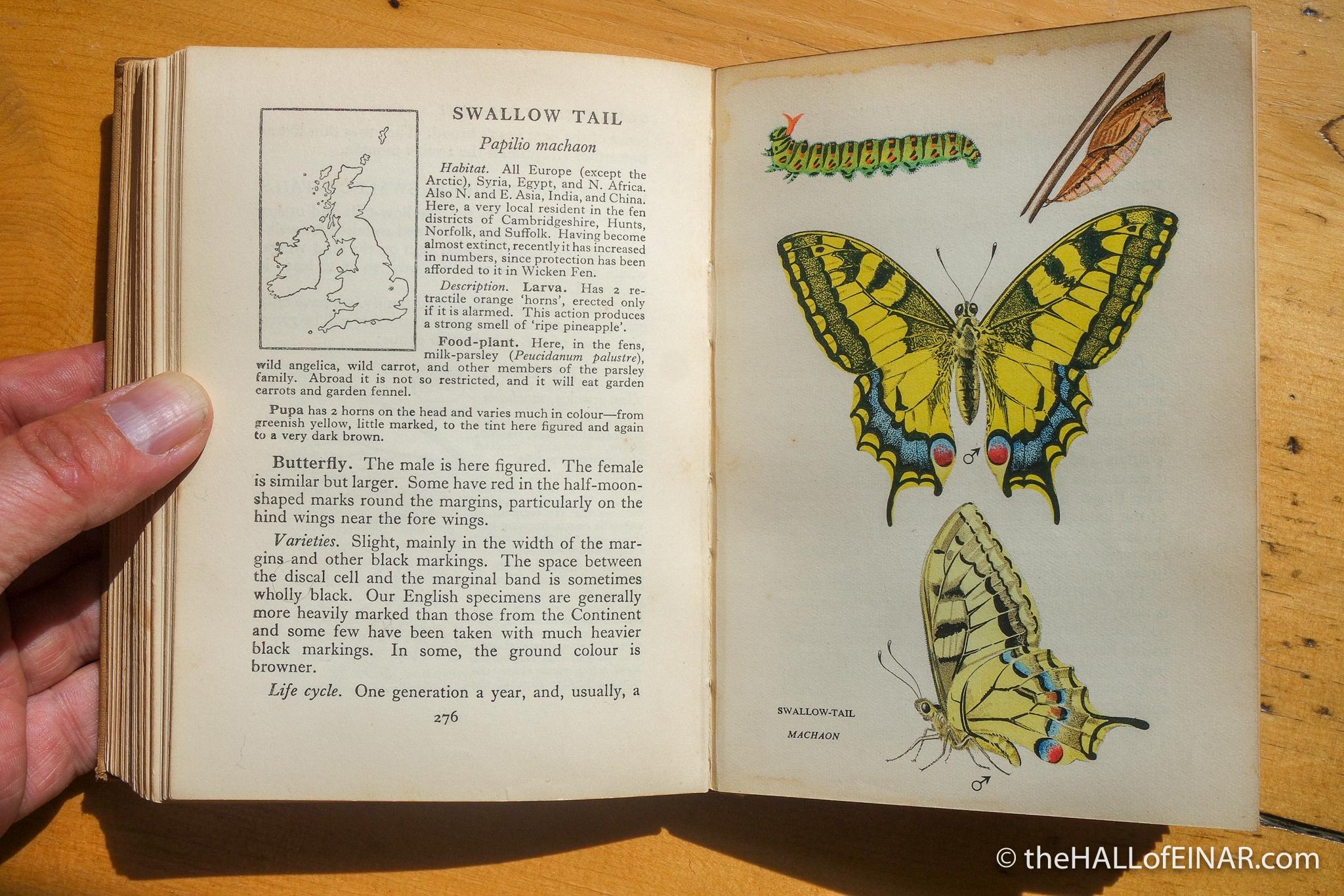 Swallowtail - Edmund Sandars