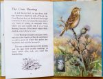 Corn Bunting - The Ladybird Book of British Birds - Roland Green