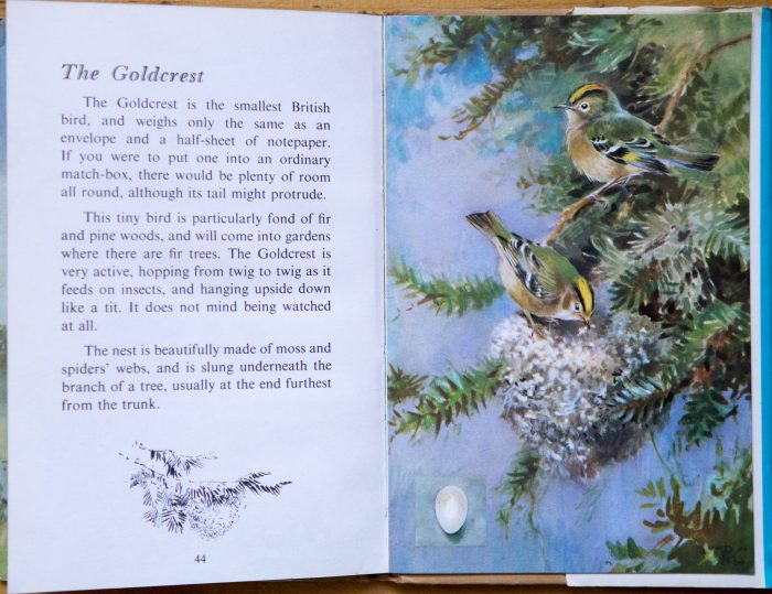 Goldcrest - Ladybird Book of British Birds