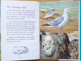 Herring Gull - Ladybird Book of British Birds