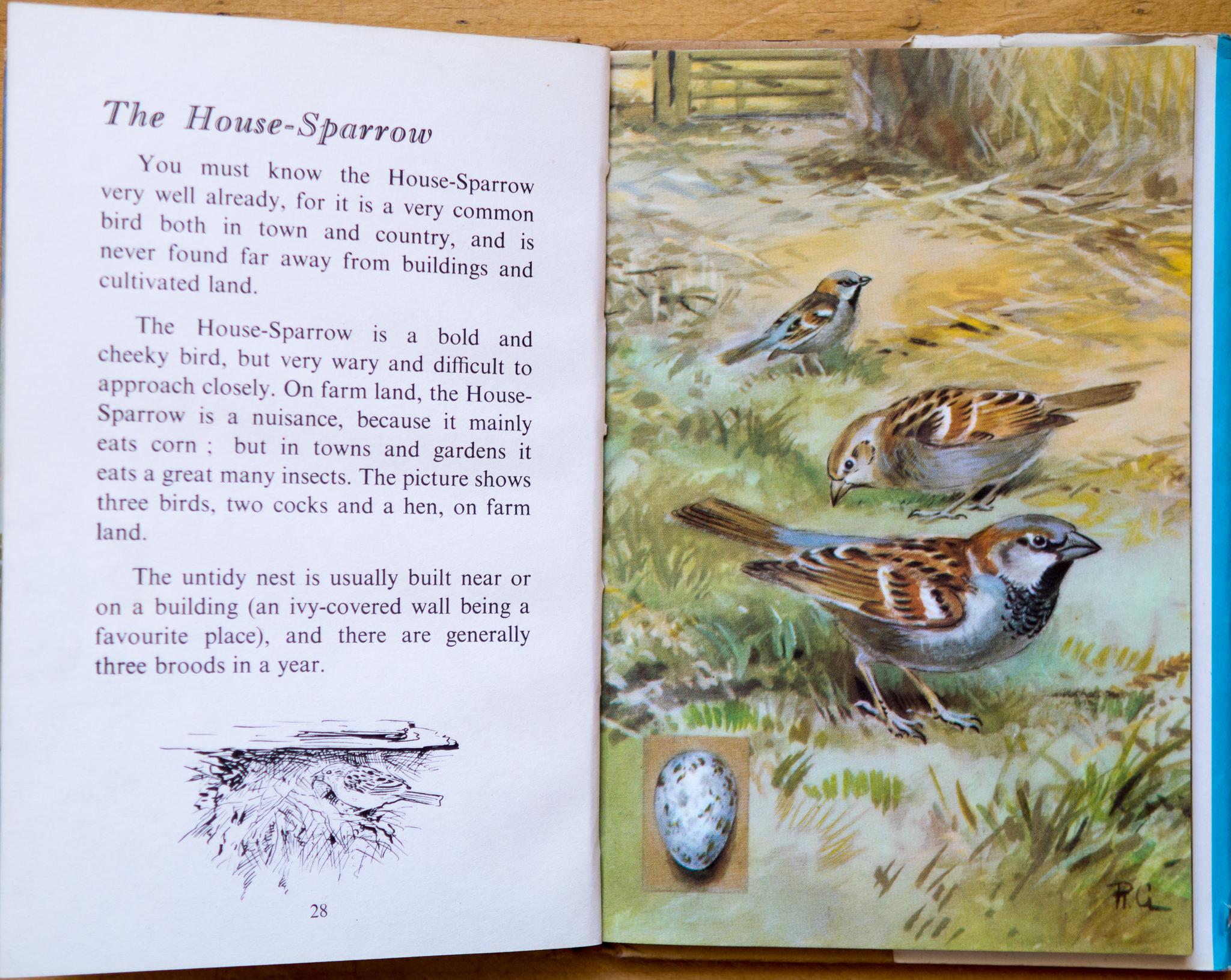 House Sparrow - Ladybird Book of British Birds