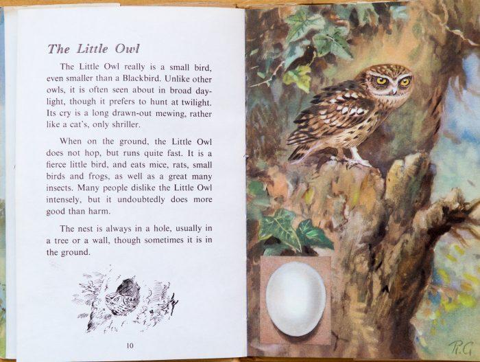 Little Owl - Ladybird Book of British Birds
