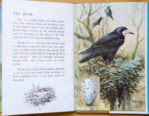 Rook - Ladybird Book of British Birds