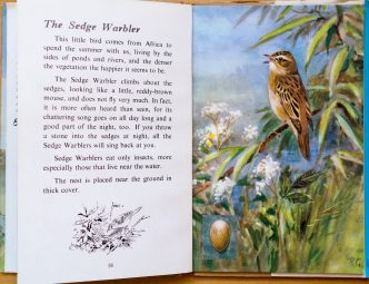 Sedge Warbler - Ladybird Book of British Birds