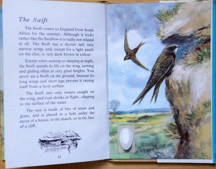 Swift - Ladybird Book of British Birds