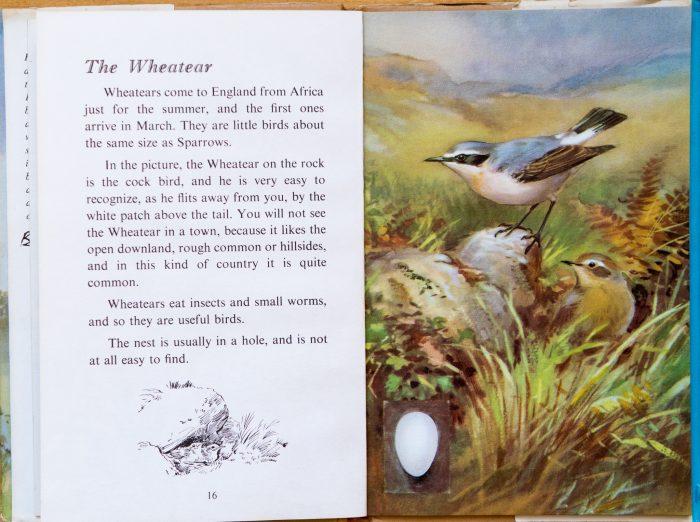 Wheatear - Ladybird Book of British Birds