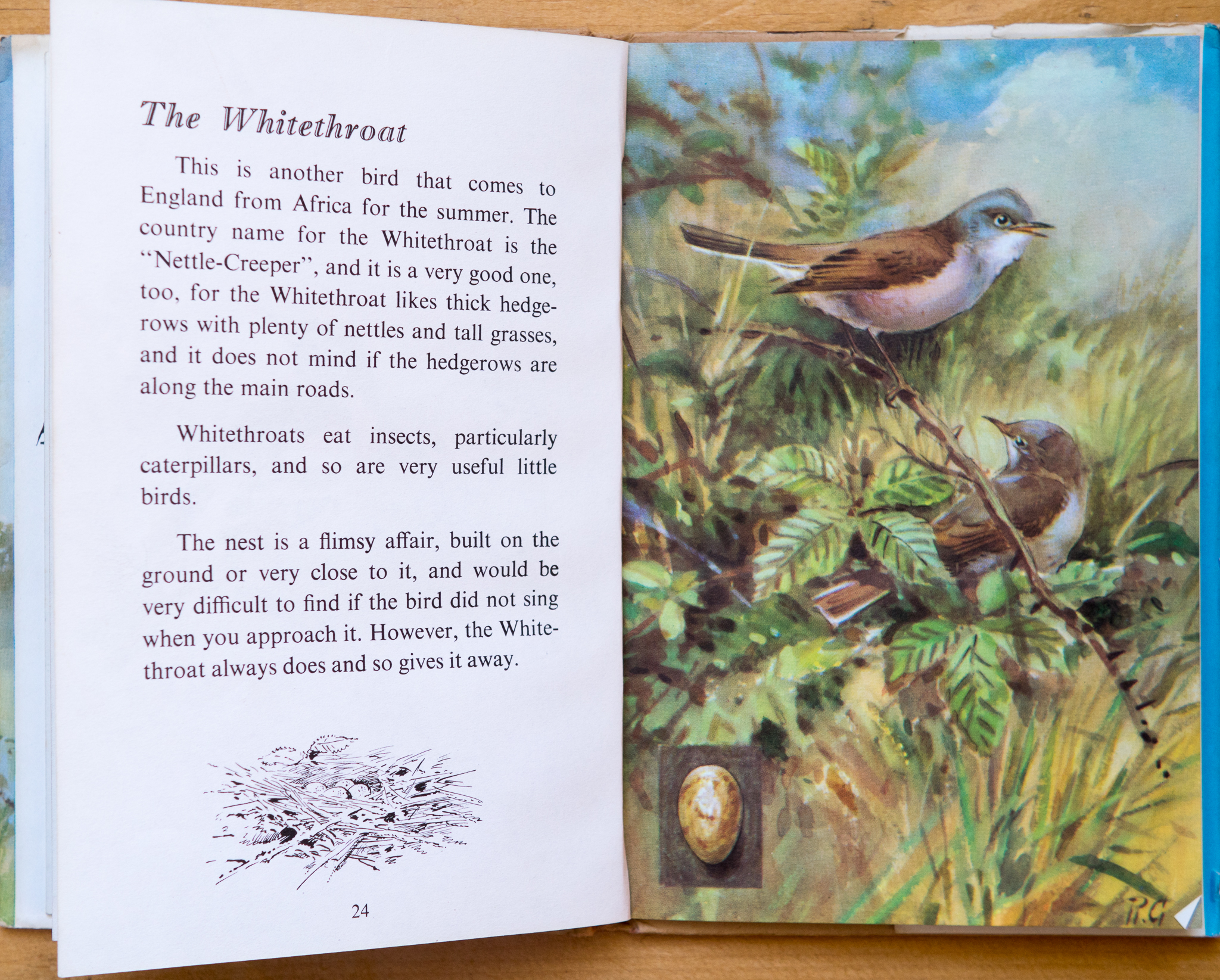 Whitethroat - Ladybird Book of British Birds
