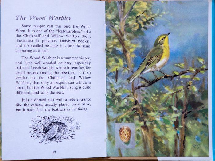 Wood Warbler - Ladybird Book of British Birds