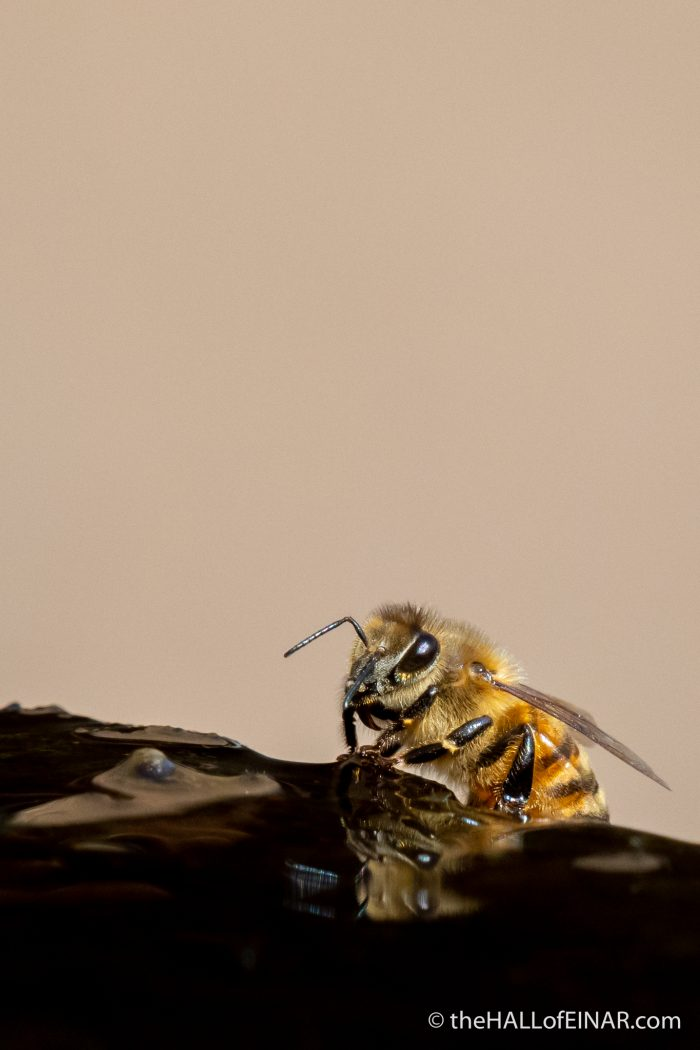 Bees - The Hall of Einar - photograph (c) David Bailey (not the)