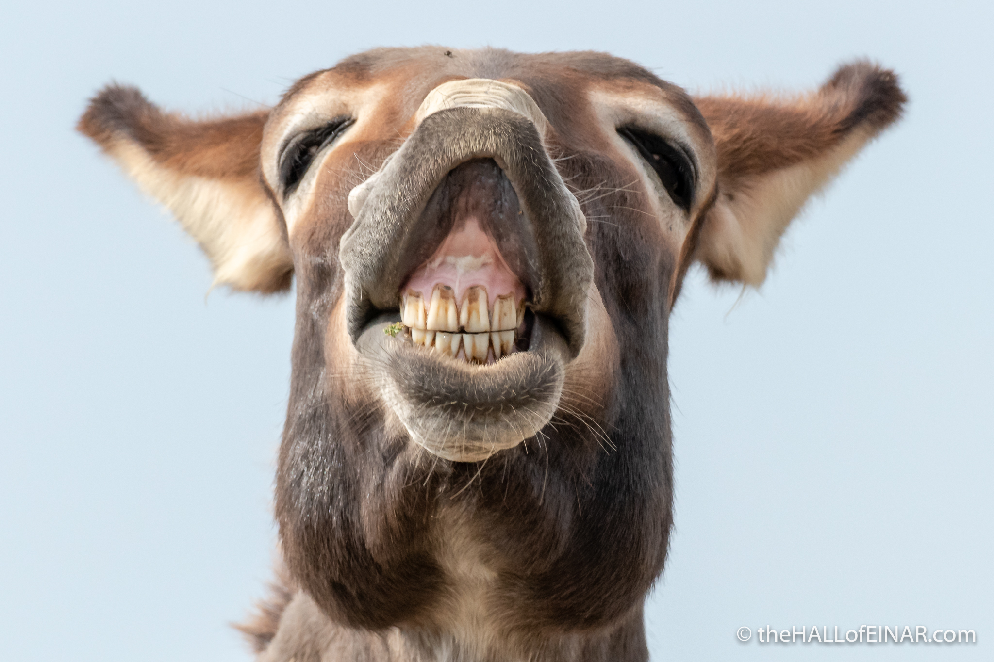 Donkey - The Hall of Einar - photograph (c) David Bailey (not the)