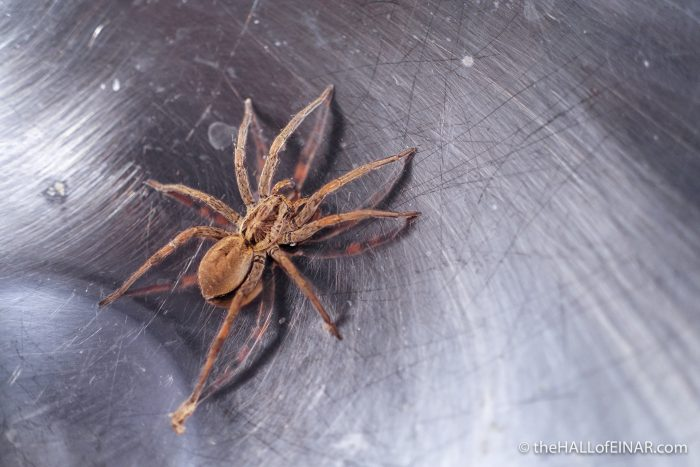 Spider - The Hall of Einar - photograph (c) David Bailey (not the)