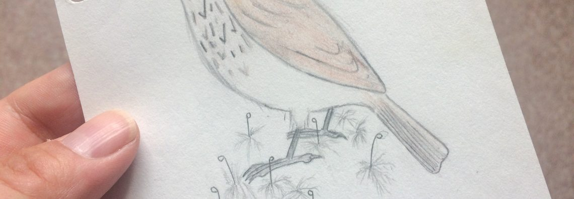 Spotted Flycatcher - The Hall of Einar - drawing (c) David Bailey (not the)