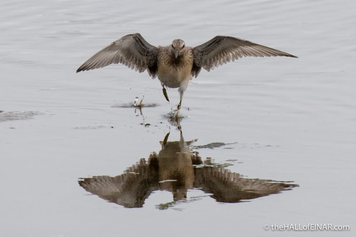 Birds at the Peedie Sea - The Hall of Einar - photograph (c) David Bailey (not the)