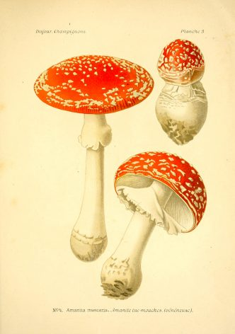 Amanita muscaria - The Hall of Einar