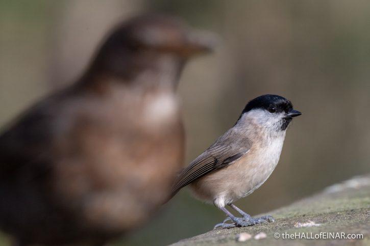 Blackbird - The Hall of Einar - photograph (c) David Bailey (not the)