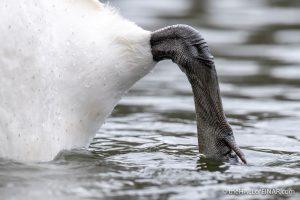 Swan's Heel - The Hall of Einar - photograph (c) David Bailey