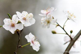 Spring at Decoy - The Hall of Einar - photograph (c) David Bailey