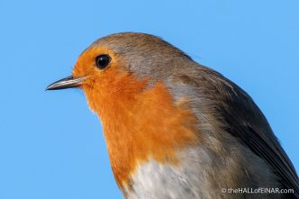 Robin - Crime Lake - The Hall of Einar - photograph (c) David Bailey (not the)