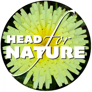 Head for Nature - YouTube channel