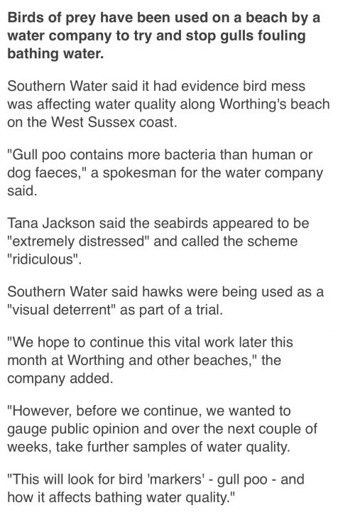 BBC News Worthing - Hawks used in bid to stop gulls pooing in sea at Worthing