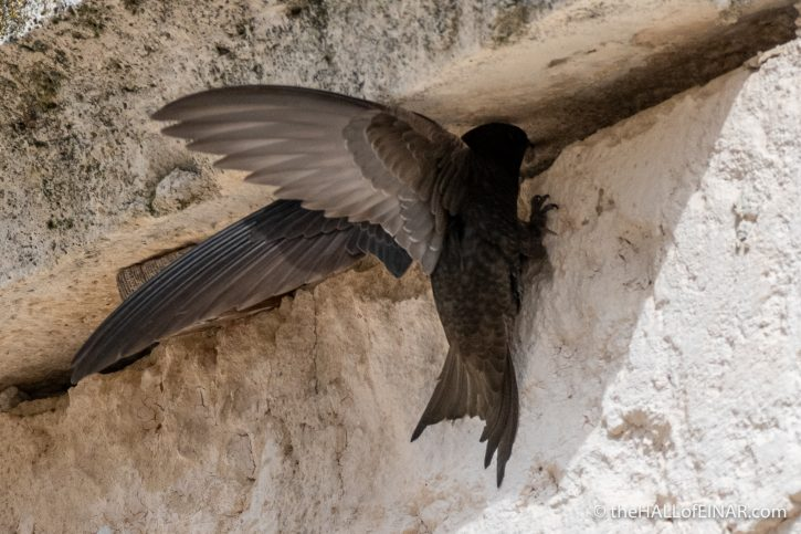Swifts in Matera - The Hall of Einar - photograph (c) David Bailey (not the)