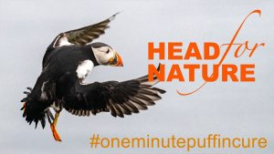 One Minute Puffin Cure #6