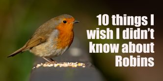 10 things I wish I didn't know about Robins