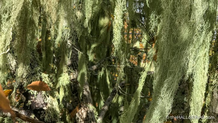 Lichen - Gran Canaria - The Hall of Einar - photograph (c) David Bailey (not the)