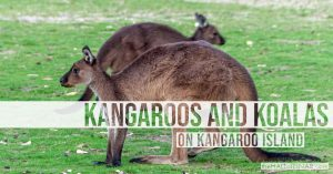 Kangaroos and Koalas - The Hall of Einar