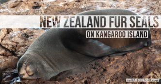 Kangaroo Island - The Hall of Einar - photograph (c) David Bailey (not the)