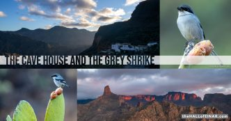 The Cave House and the Grey Shrike - The Hall of EInar