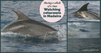 Watching Whales in Madeira