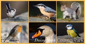 Daisy Nook