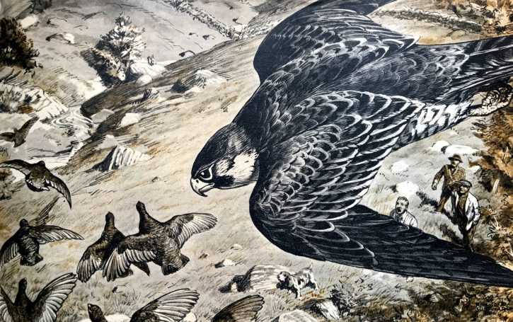 Peregrine - The Hall of Einar