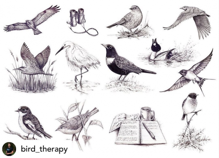 Bird Therapy Illustrations - Bernoid