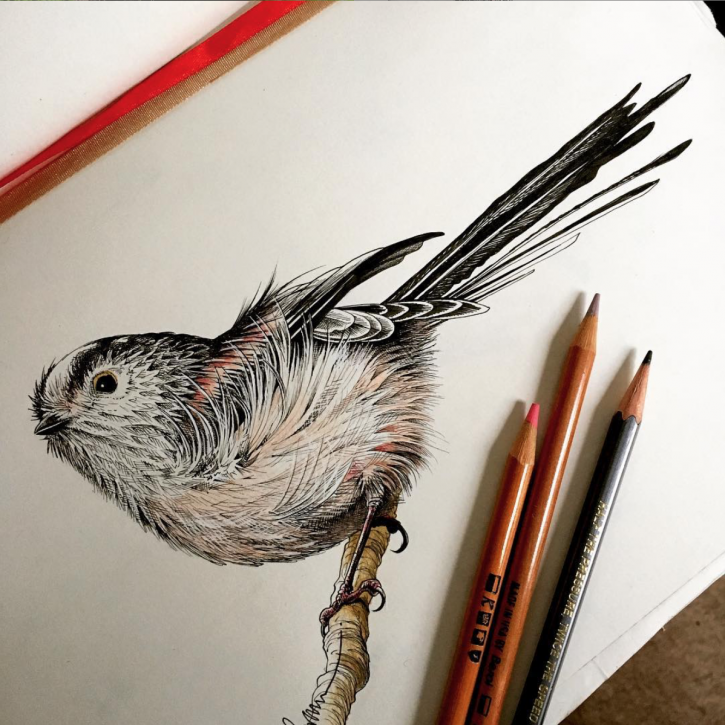 Jo Brown illustration - Long-Tailed Tit - Bernoid