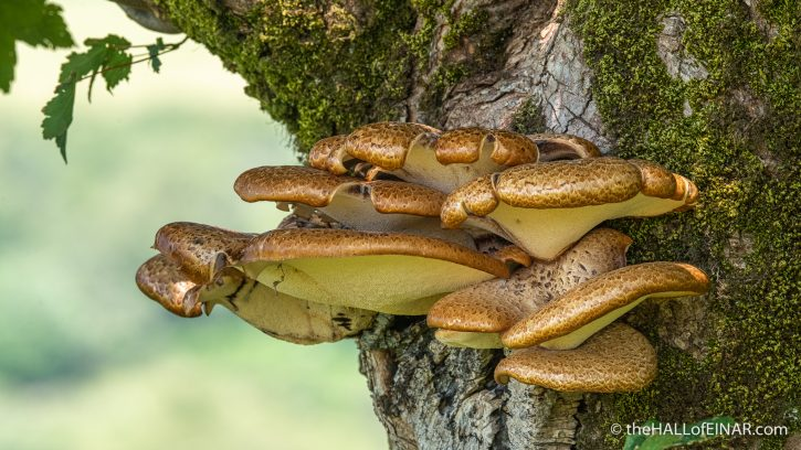 Dryad's Saddle - Emsworthy Mire - The Hall of Einar - photograph (c) David Bailey (not the)