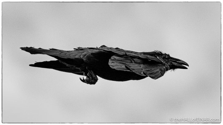 Raven - Westray - The Hall of Einar - photograph (c) David Bailey (not the)