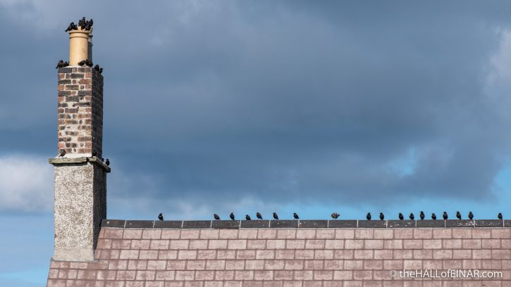 Starling - Westray - The Hall of Einar - photograph (c) David Bailey (not the)