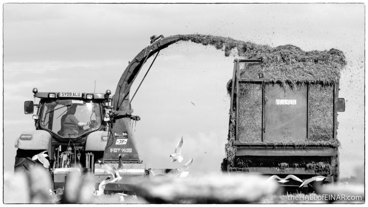 Silage - Westray - The Hall of Einar - photograph (c) David Bailey (not the)